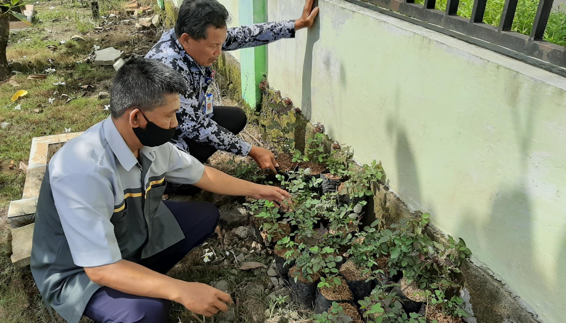 Bantuan Bibit Bunga Mawar Untuk Percantik Jalan di Kelurahan Tawangrejo